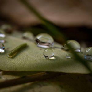 Natūralus šalavijų eterinis aliejus ir hidrolatas